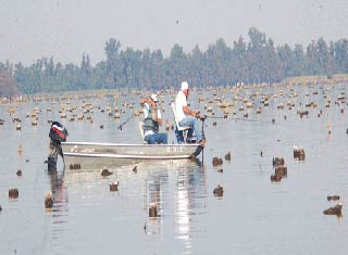 Reelfoot Lake At Lowest Water Level in Decades